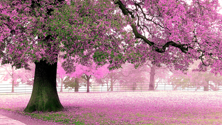 Spring Nature HD Wallpaper For Android