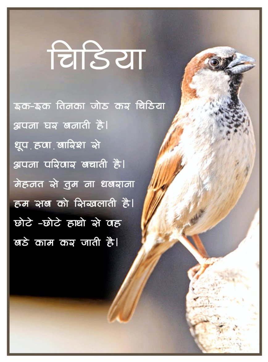 essay on sparrow for kids