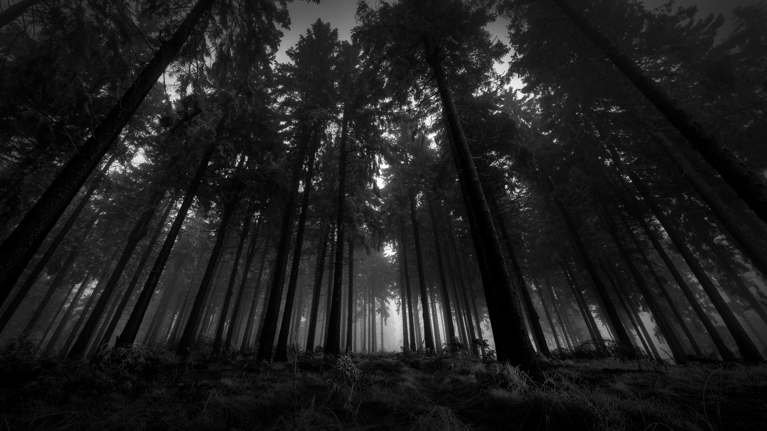 Forest HD Wallpaper For Tab
