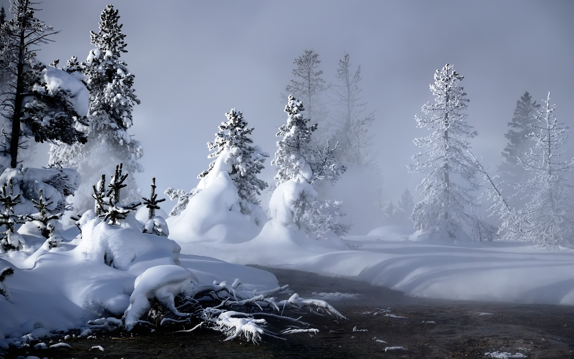 Winter Nature HD Wallpaper For Iphone