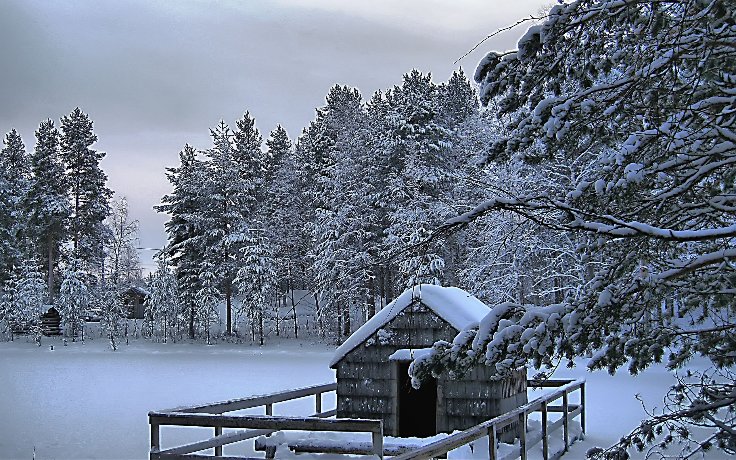 Winter Nature HD Wallpaper For Mobile