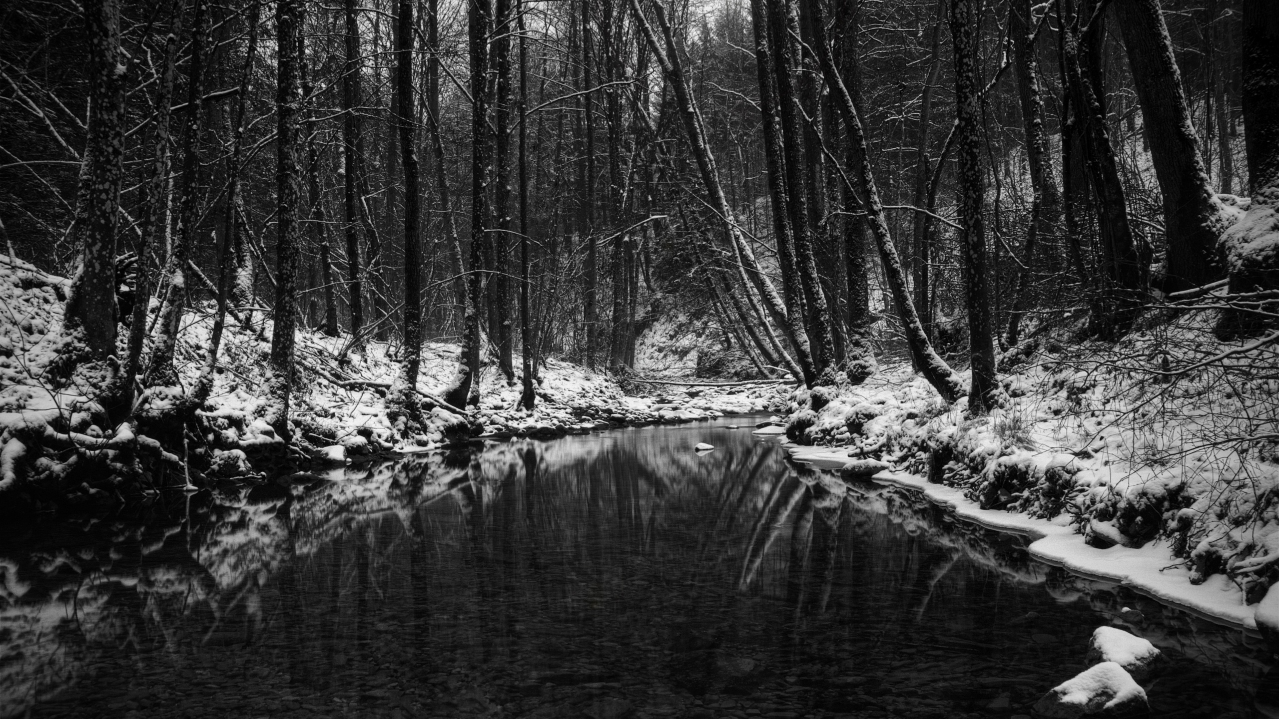 Black And White Nature HD Wallpaper For Tab