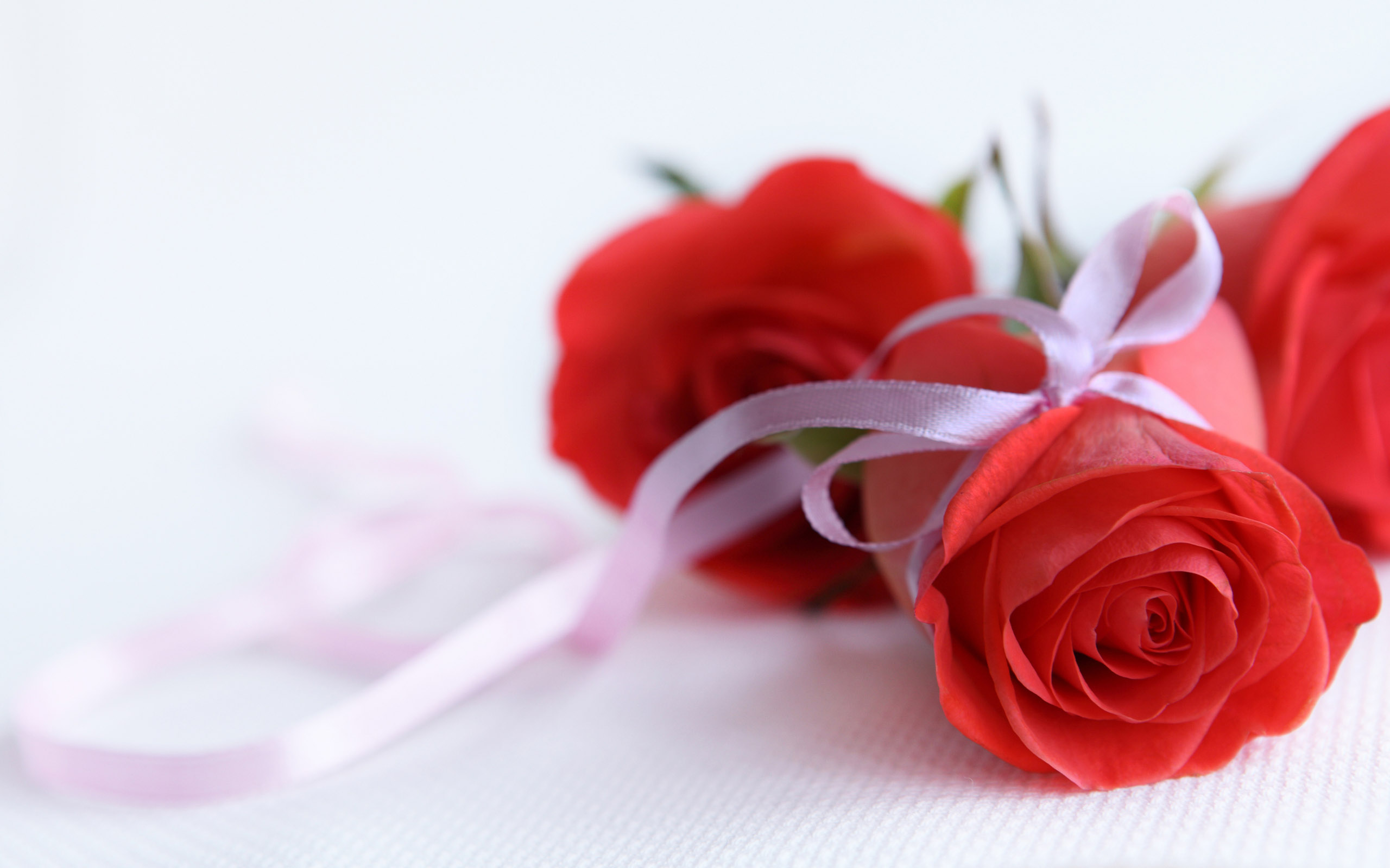red rose beautiful images