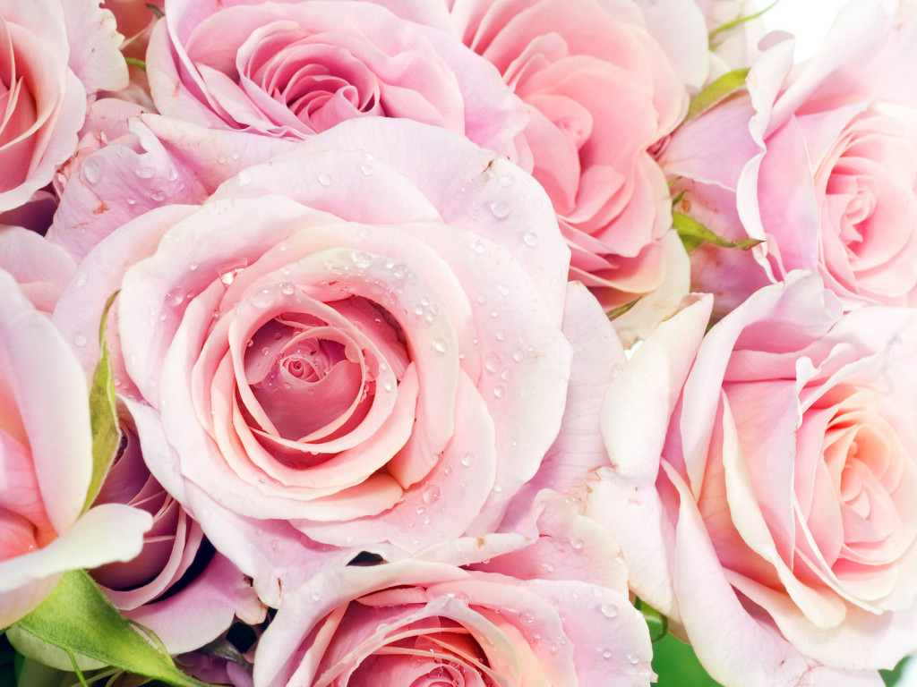 pink flowers wallpapers for room decoration