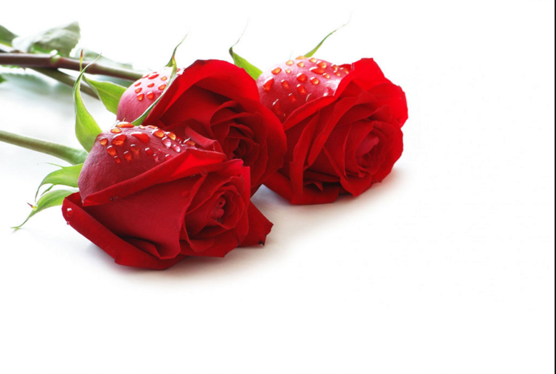 red rose images for valentines day