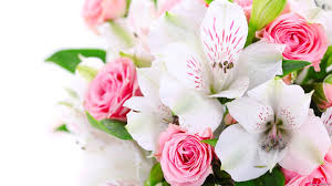 white pink beautiful flower images