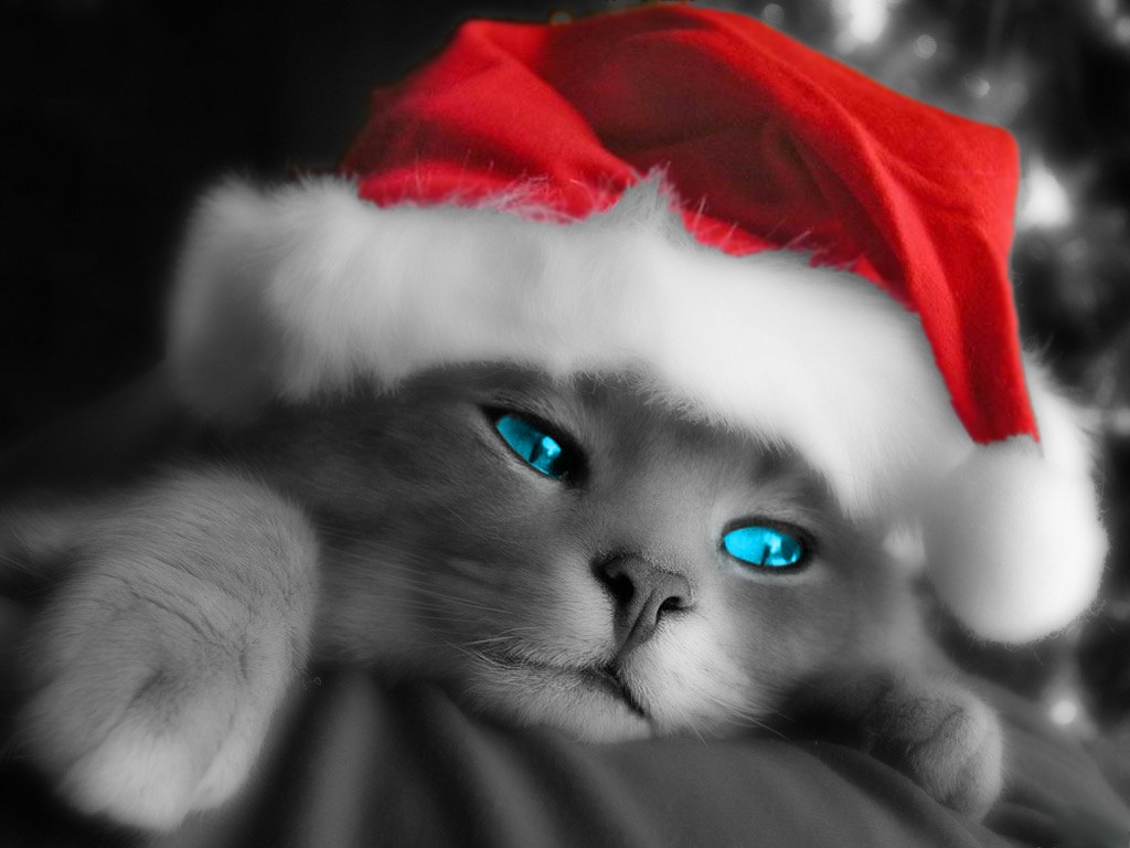 cute cat wallpapers for android