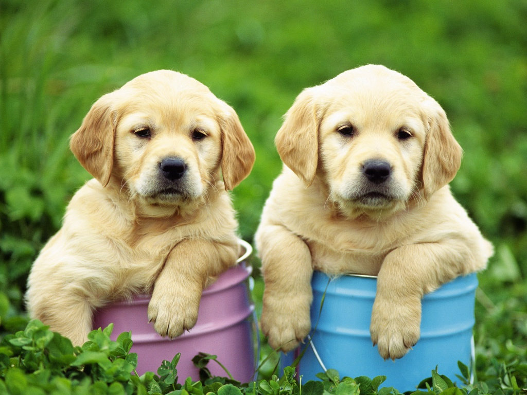 dog wallpapers for laptop