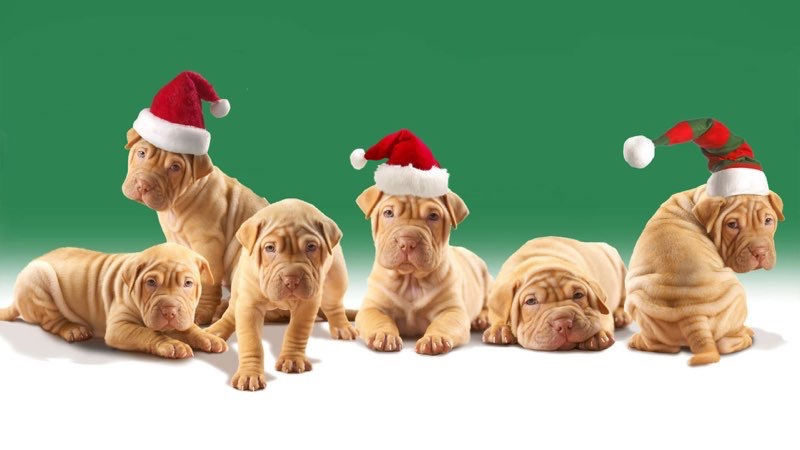 dogs wallpapers for free download