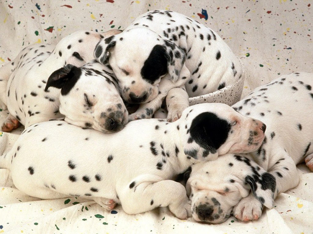 sleeping dog images hd for background