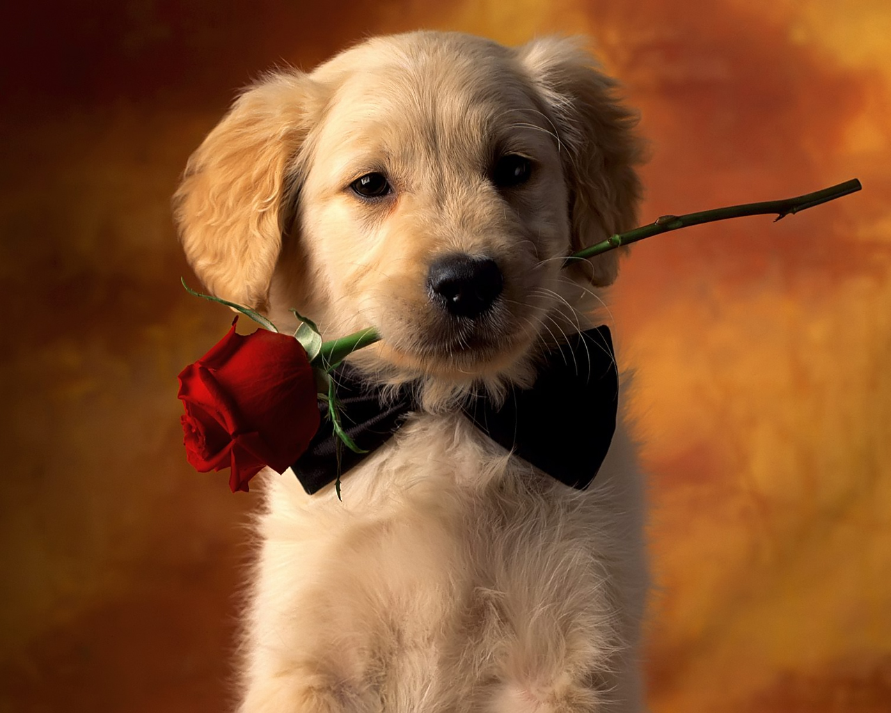 cute dog valentines day wallpapers