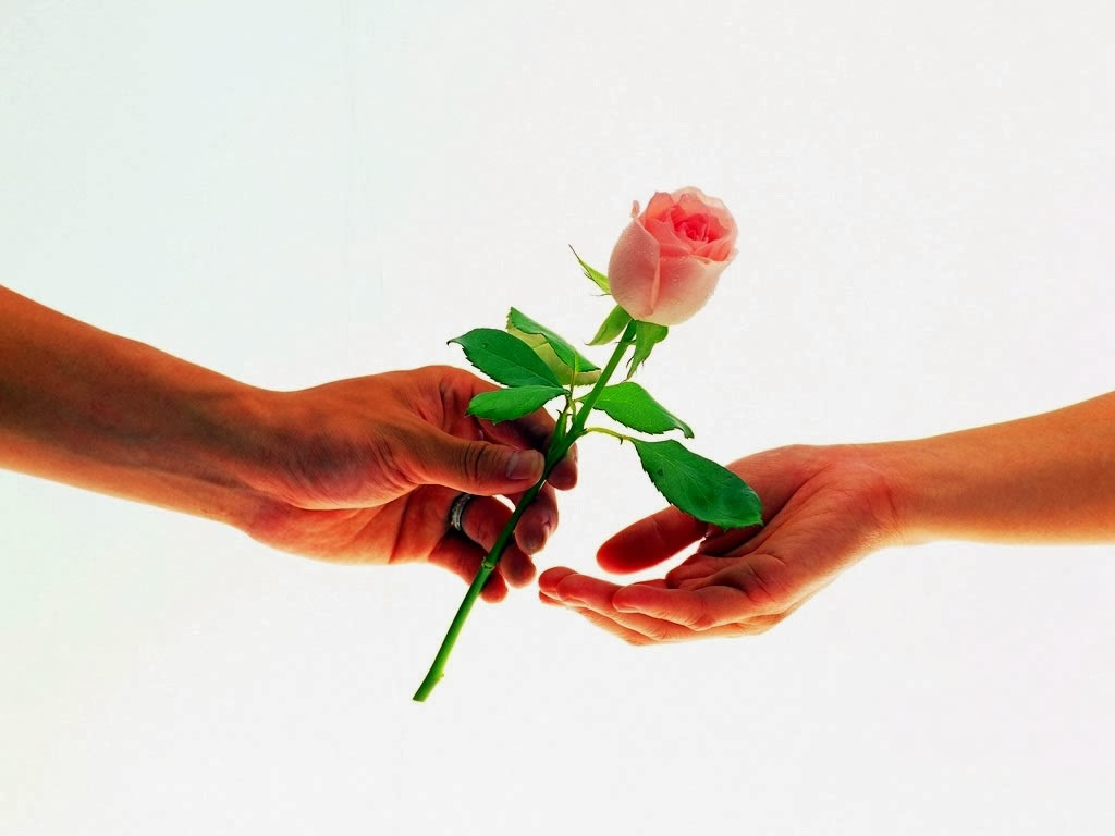 rose day hd wallpapers free download