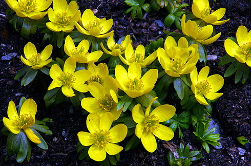 yellow flowers with name