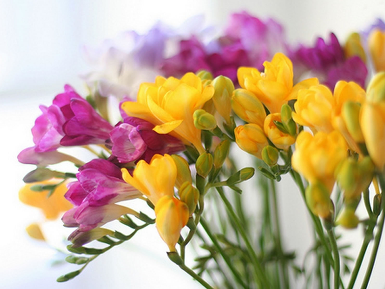 beautiful yellow flowers images
