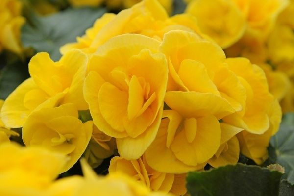 yellow flowers with meaning