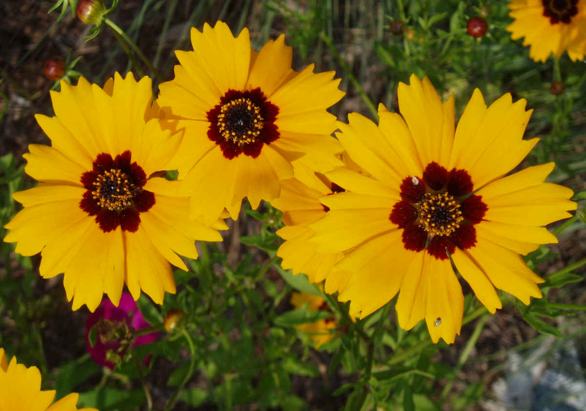 Yellow Flowers Names And Pictures Gallery Names Of Yellow Flowers
