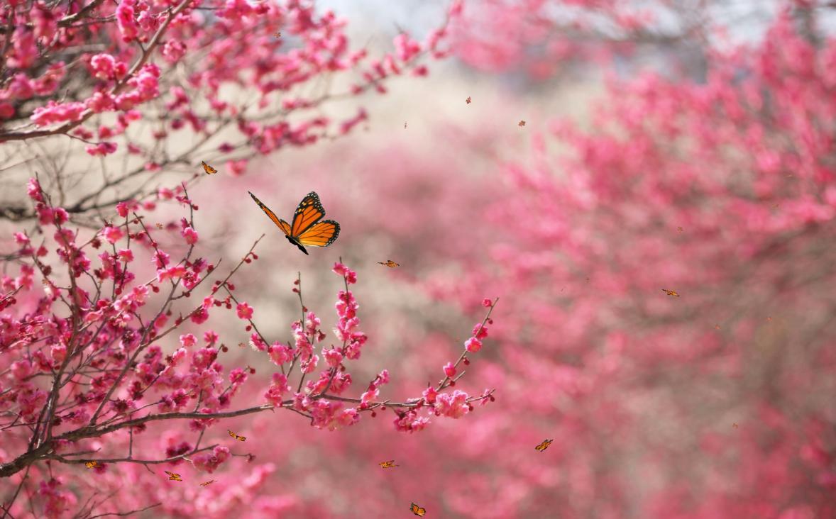 spring nature backgrounds. Spring Nature Wallpaper For Desktop Backgrounds R