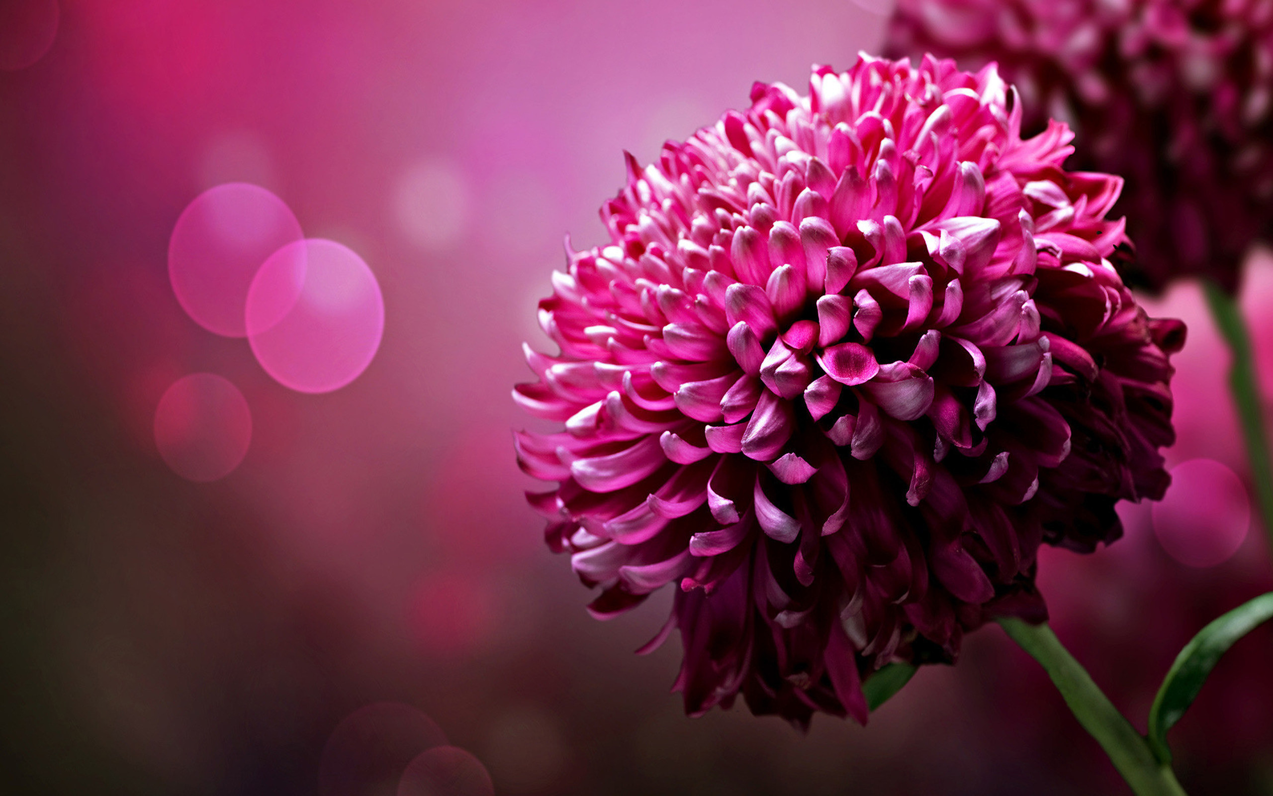 Worlds top 100 beautiful flowers images wallpaper photos free beautiful flowers wallpapers izmirmasajfo