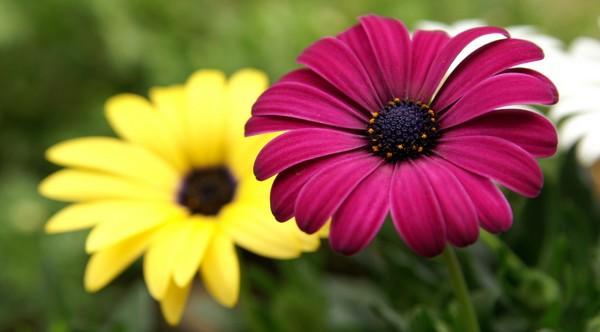 most beautiful flowers images