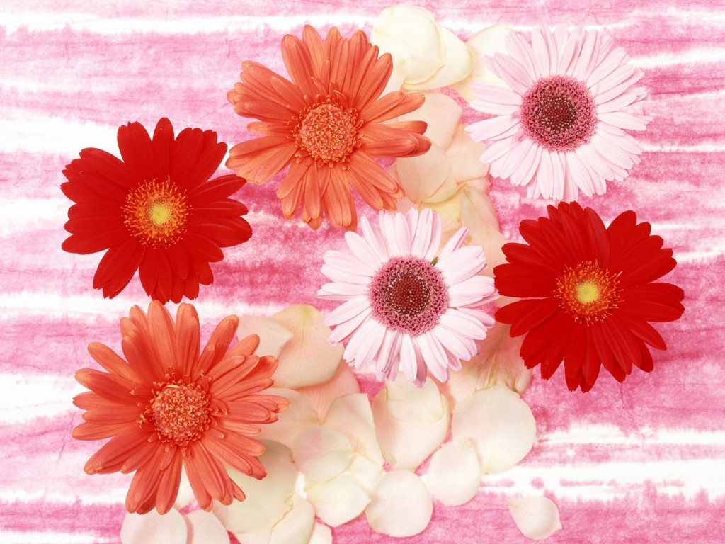 flower images with quotes