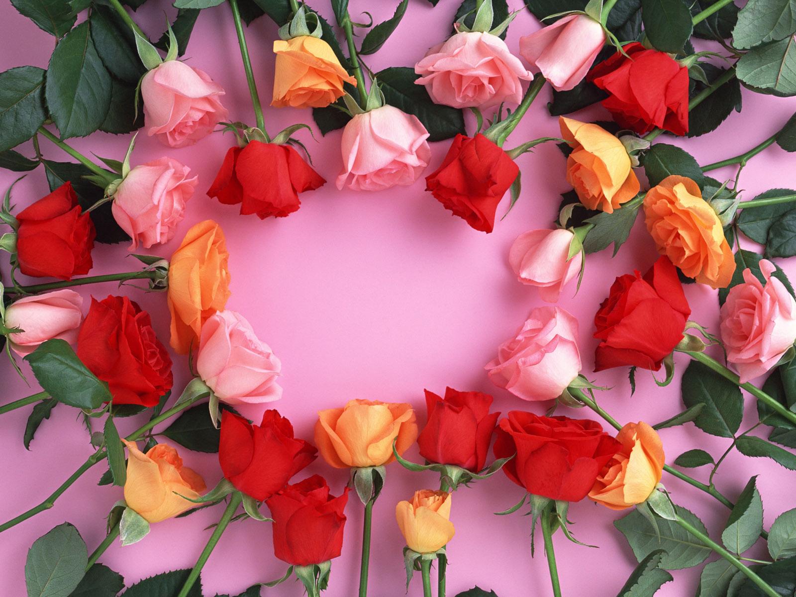beautiful flowers hd photos