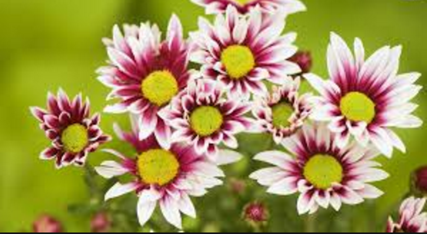 most beautiful flowers hd images
