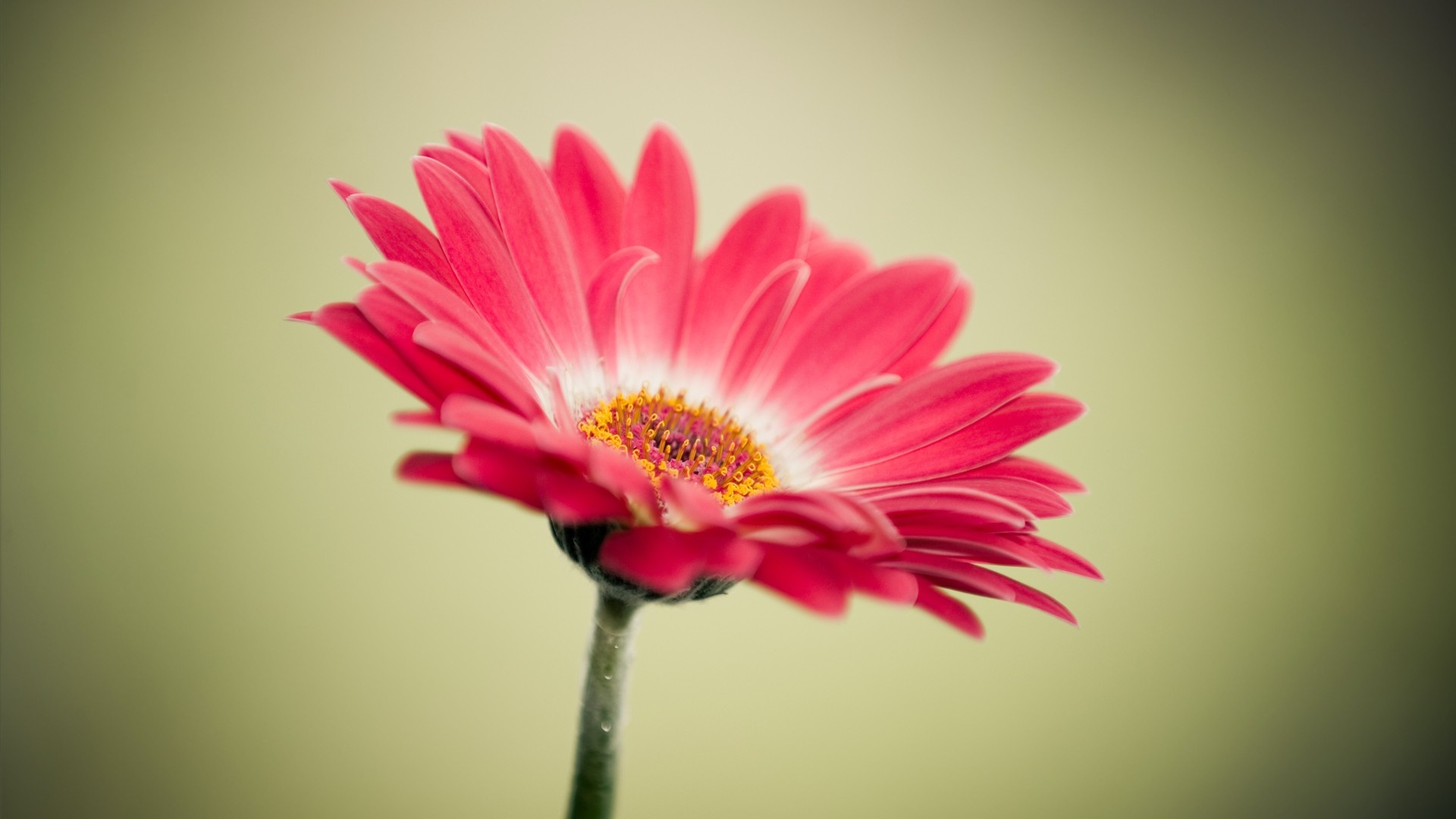 flowers wallpapers for free