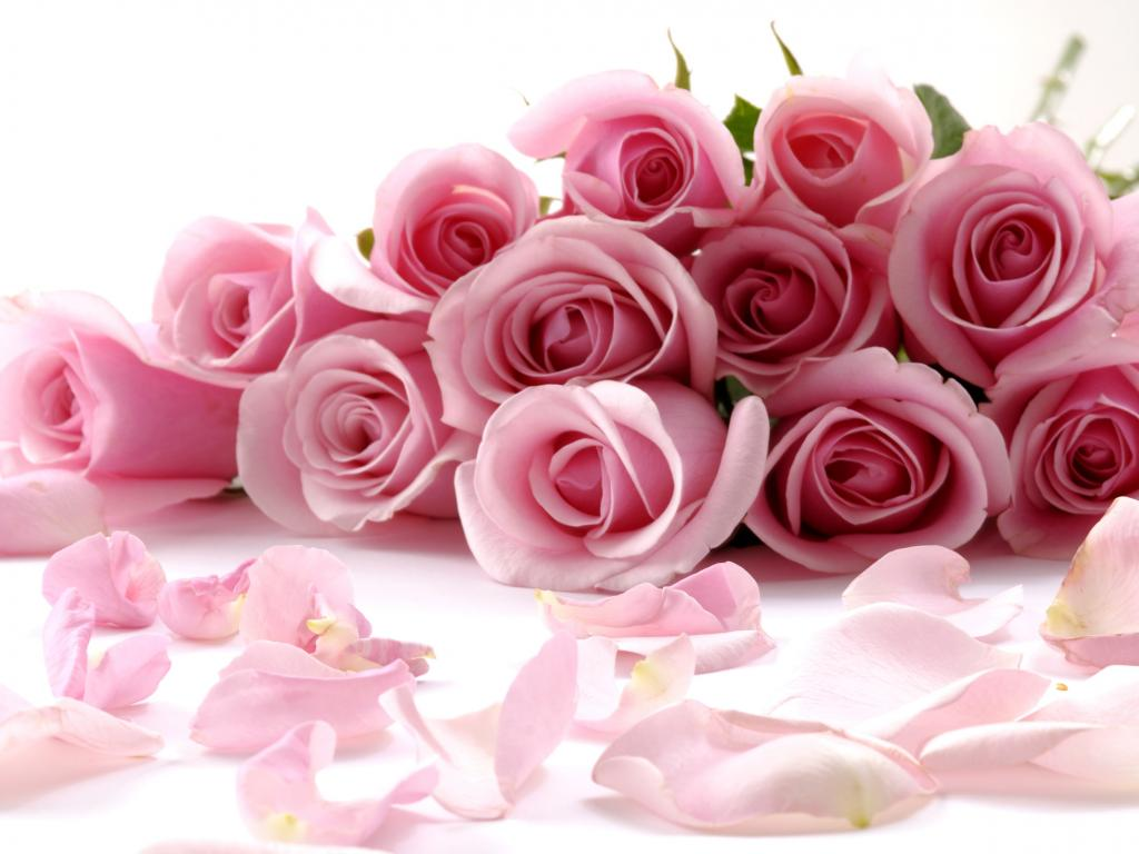 Worlds top 100 beautiful flowers images wallpaper photos free flowers images for facebook cover page izmirmasajfo