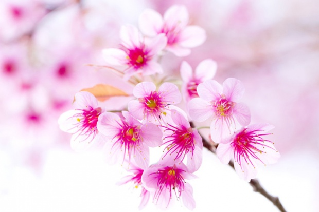best flowers images wallpapers collection