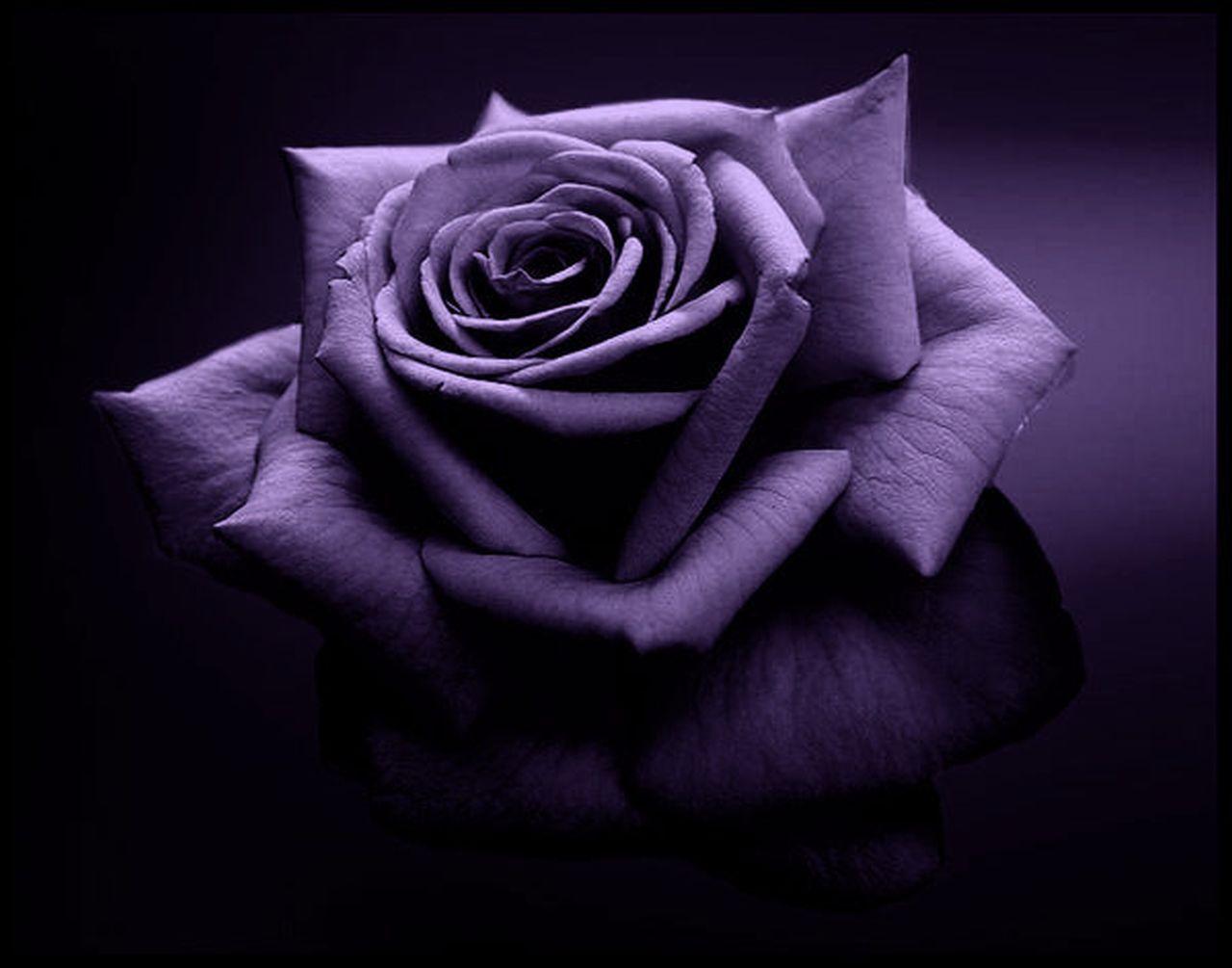 black rose for breakup images