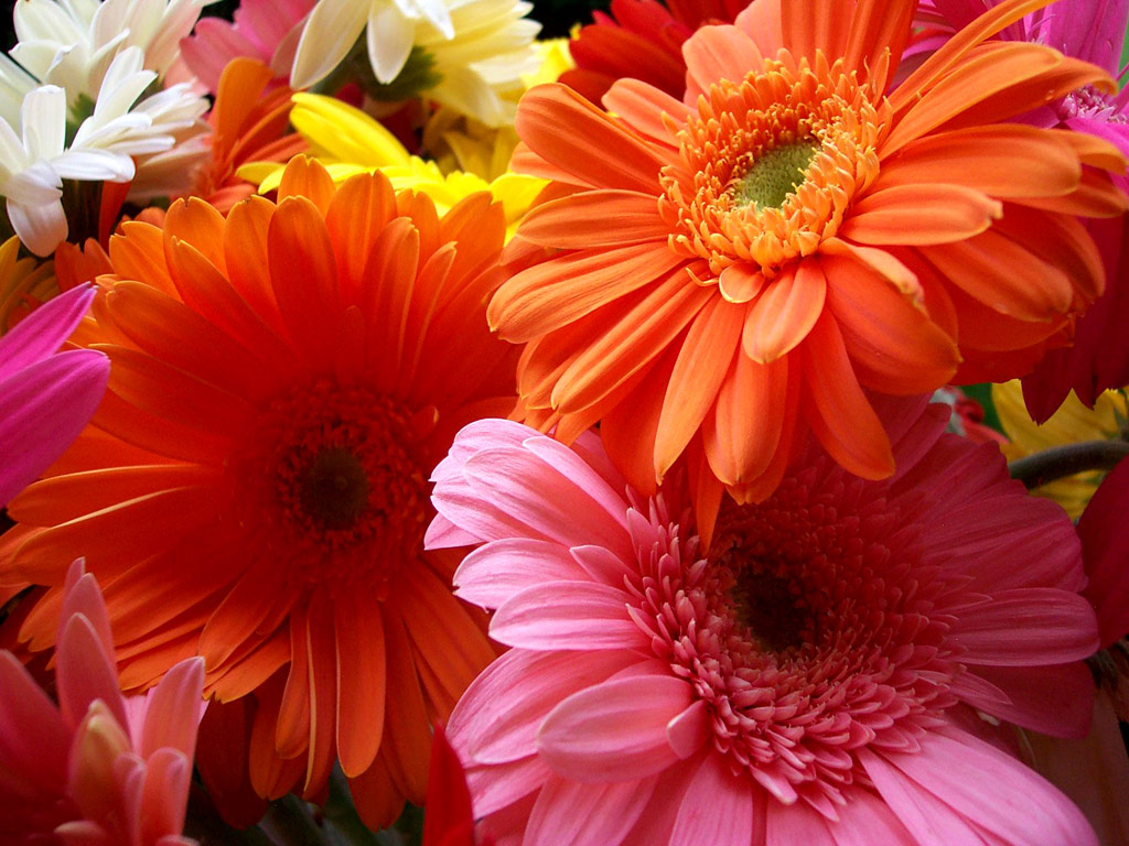 beautiful orange color pictures for android