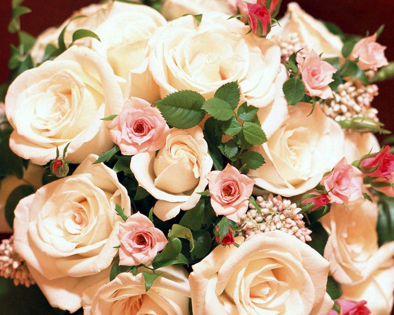 beautiful roses images for background