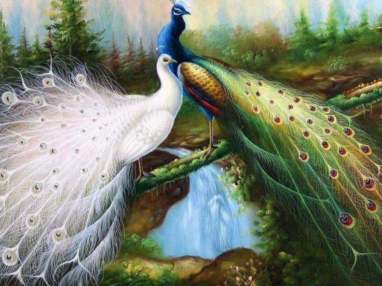 peacock imaegs wallpapers hd collection