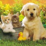 Cute Cats & Dogs Wallpapers Images Free Download For Desktop Background