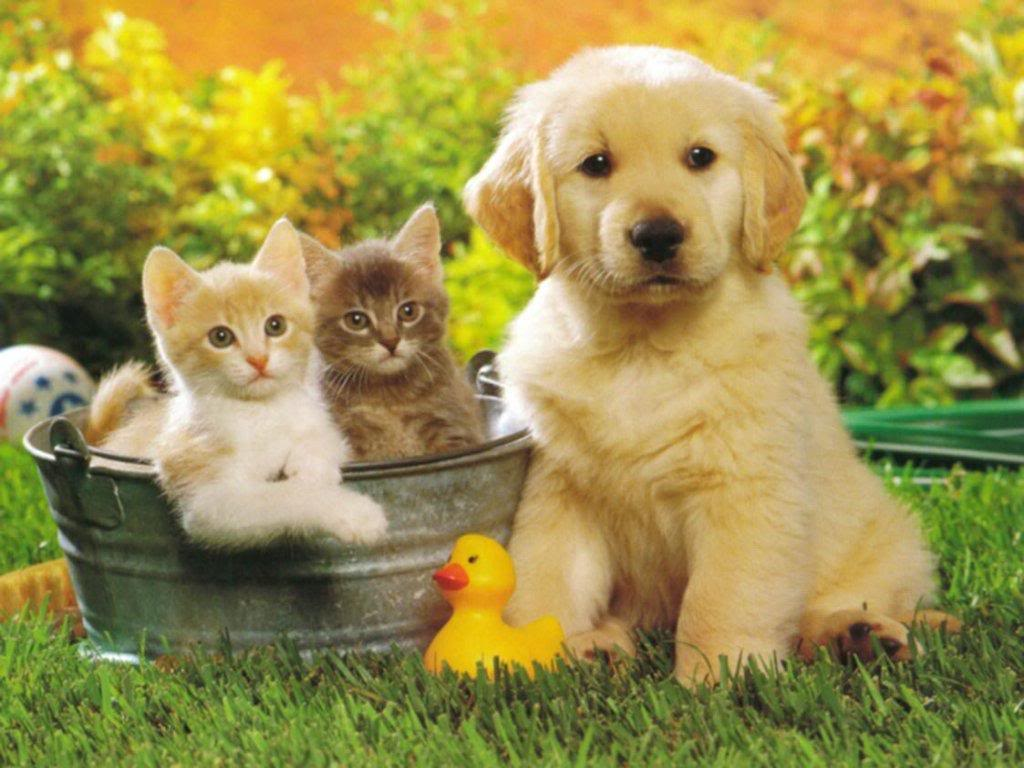 Cute Cats & Dogs Wallpapers Free Download For Desktop