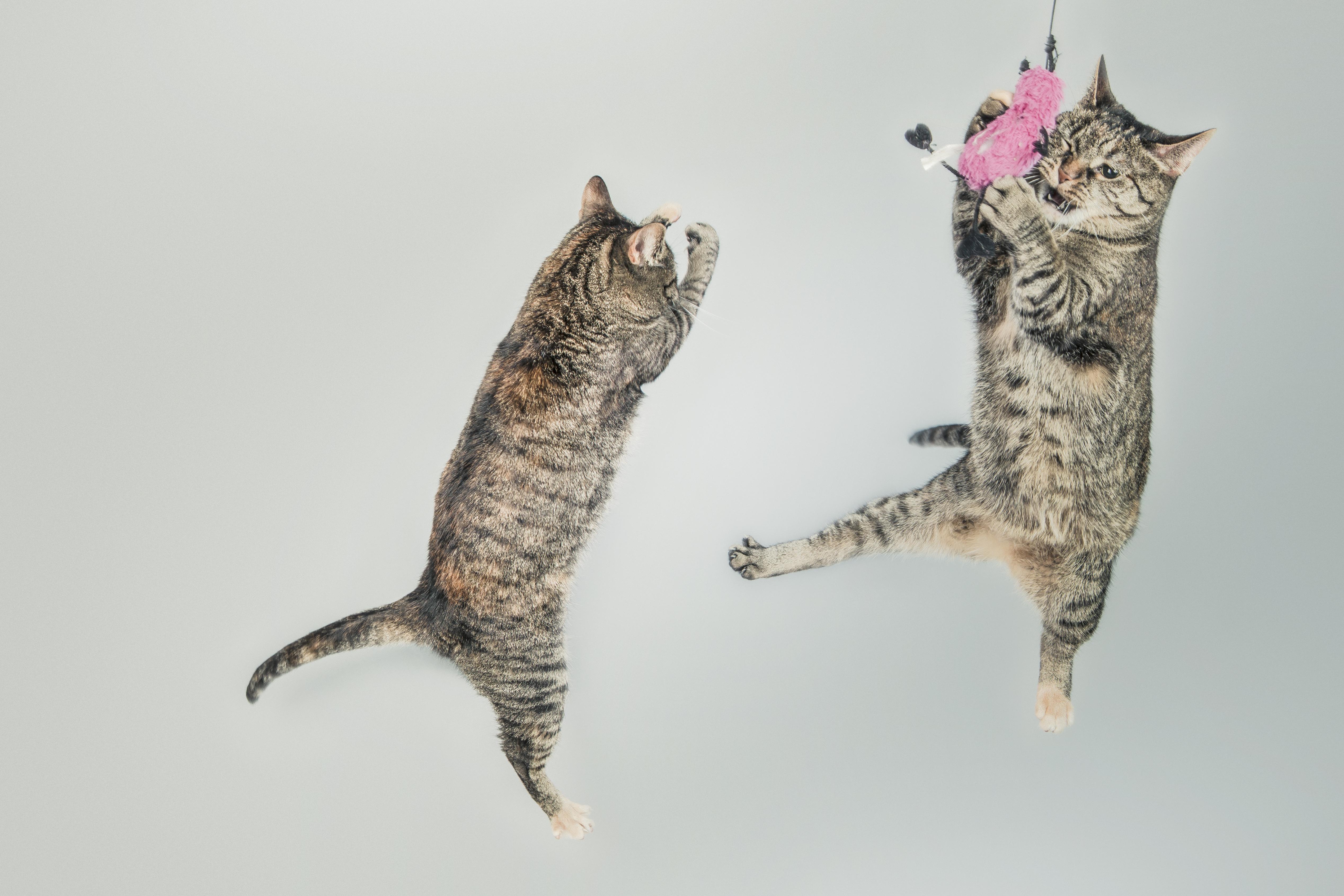 cat dancing wallpapers hd