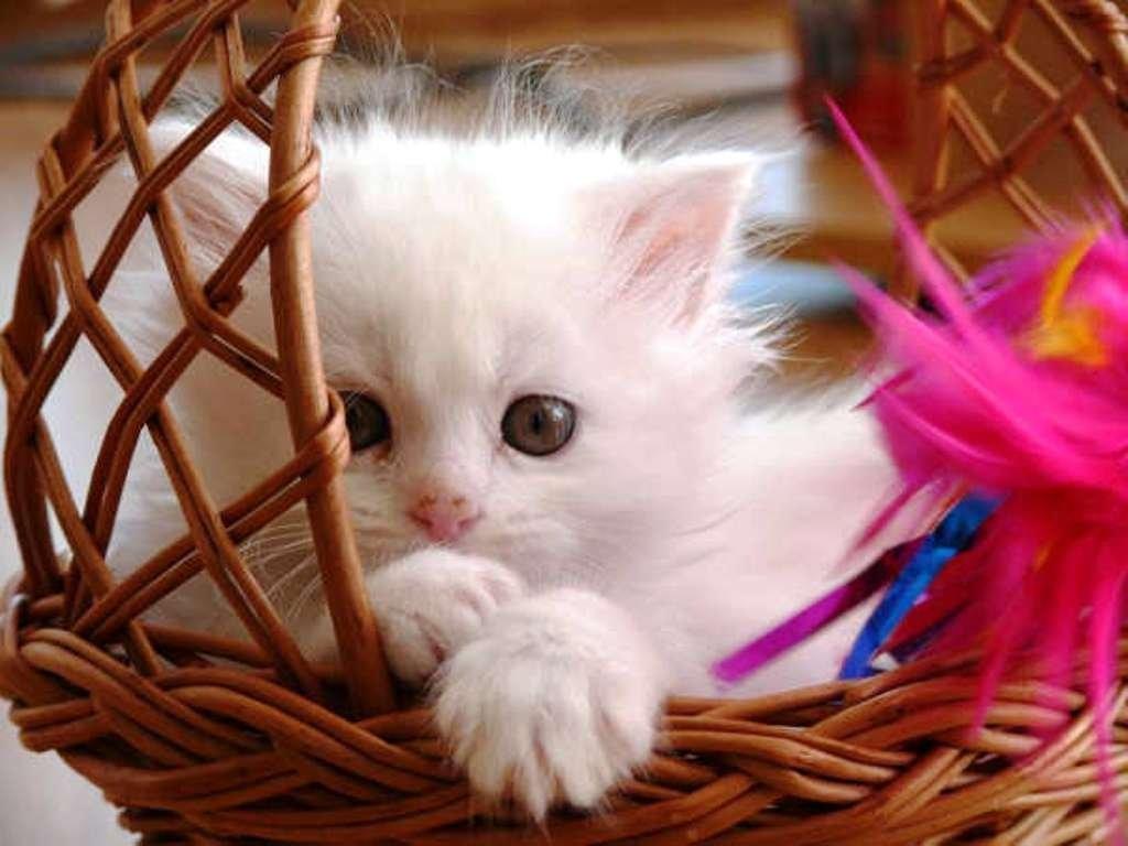 cute cat wallpaper free download