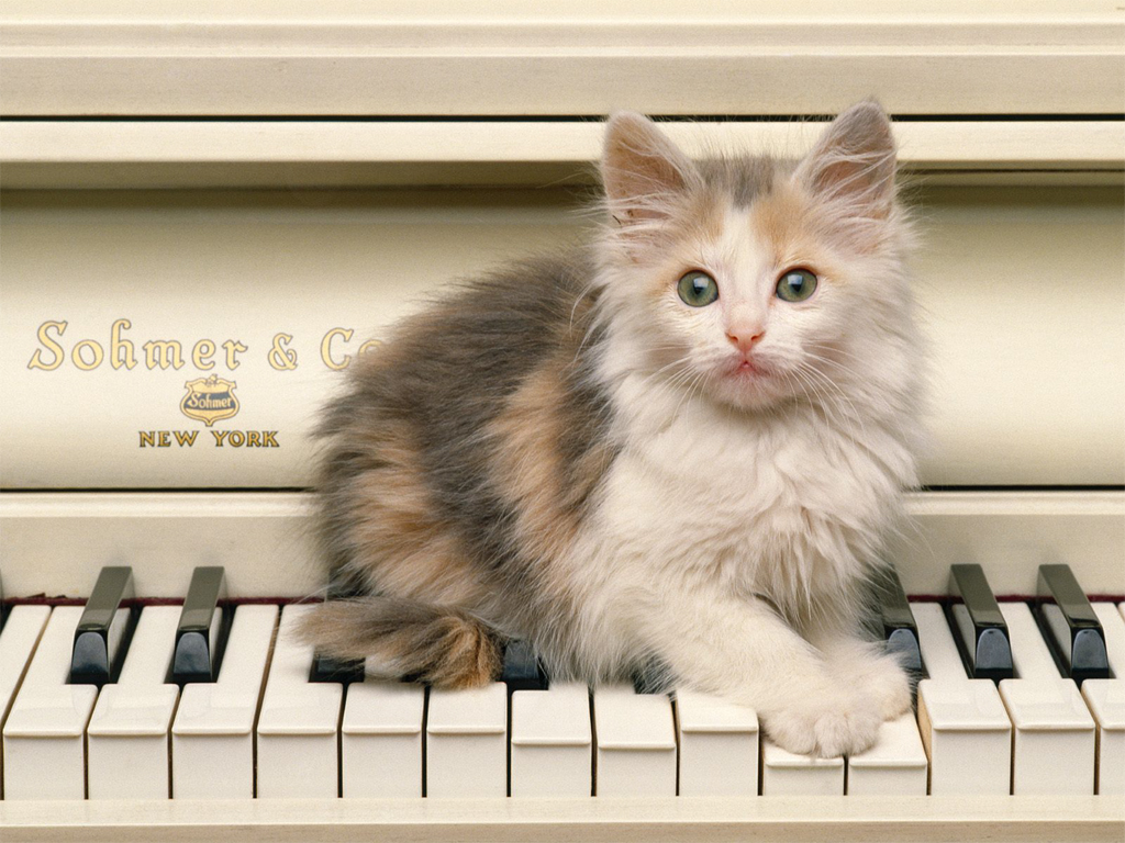 cats wallpapers free download