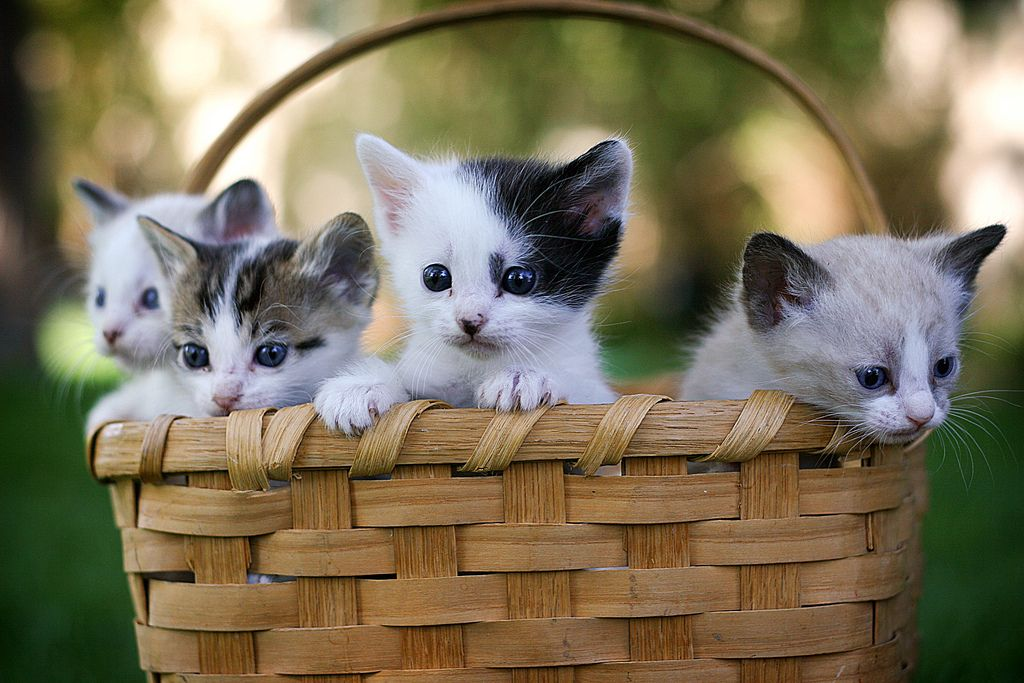 Cute Puppies And Kittens Wallpaper: Cute Cats & Dogs Wallpapers Images Free Download For