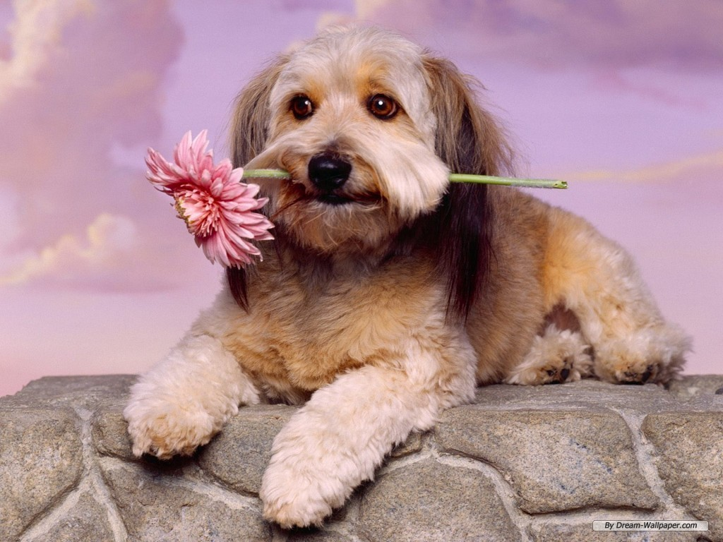 hd dog wallpapers free download for android