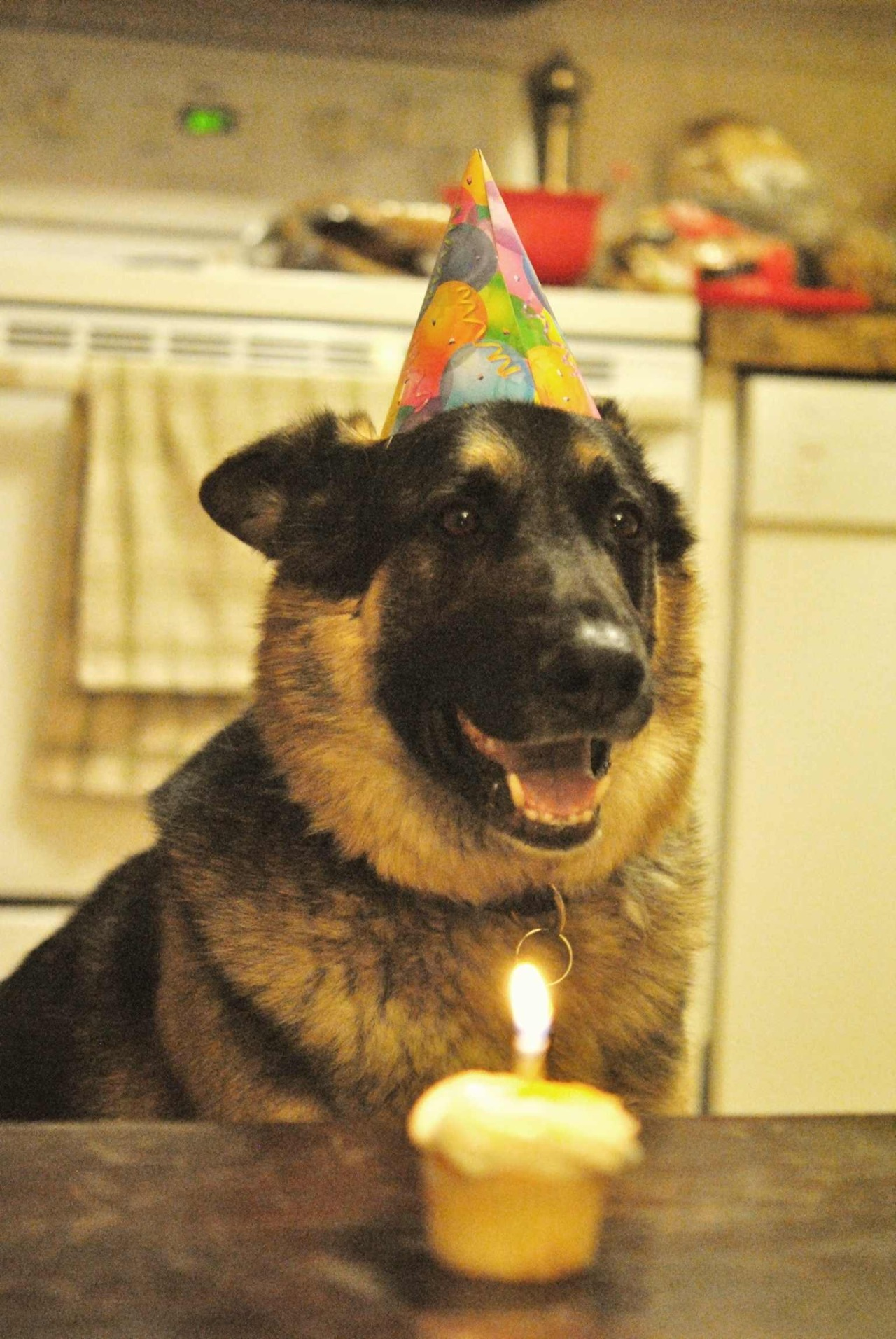 dog happy bday wallpapers