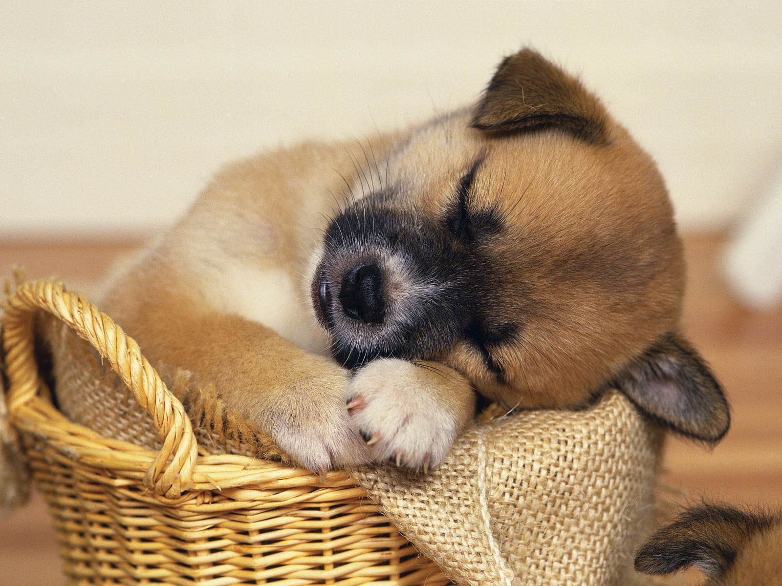 dog wallpapers free hd for android