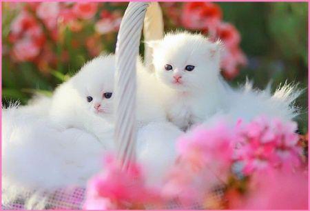 cute cat wallpapers free download