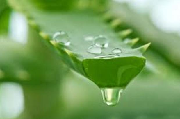 Aloe vera gel for hair