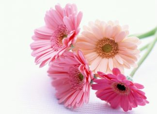 beautiful flowers in the world