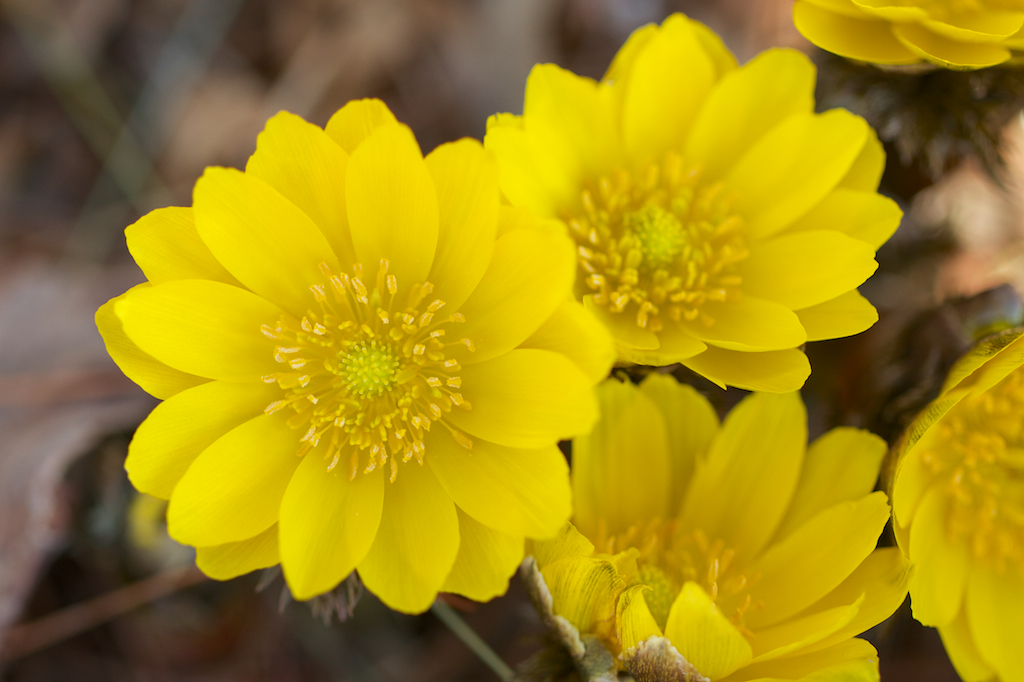 Top 30 Beautiful Yellow Flowers Names List With Pictures ...