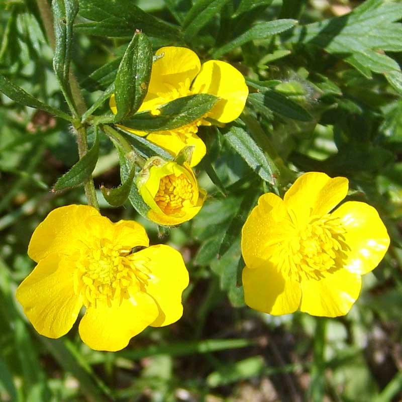 beautiful yellow flowers