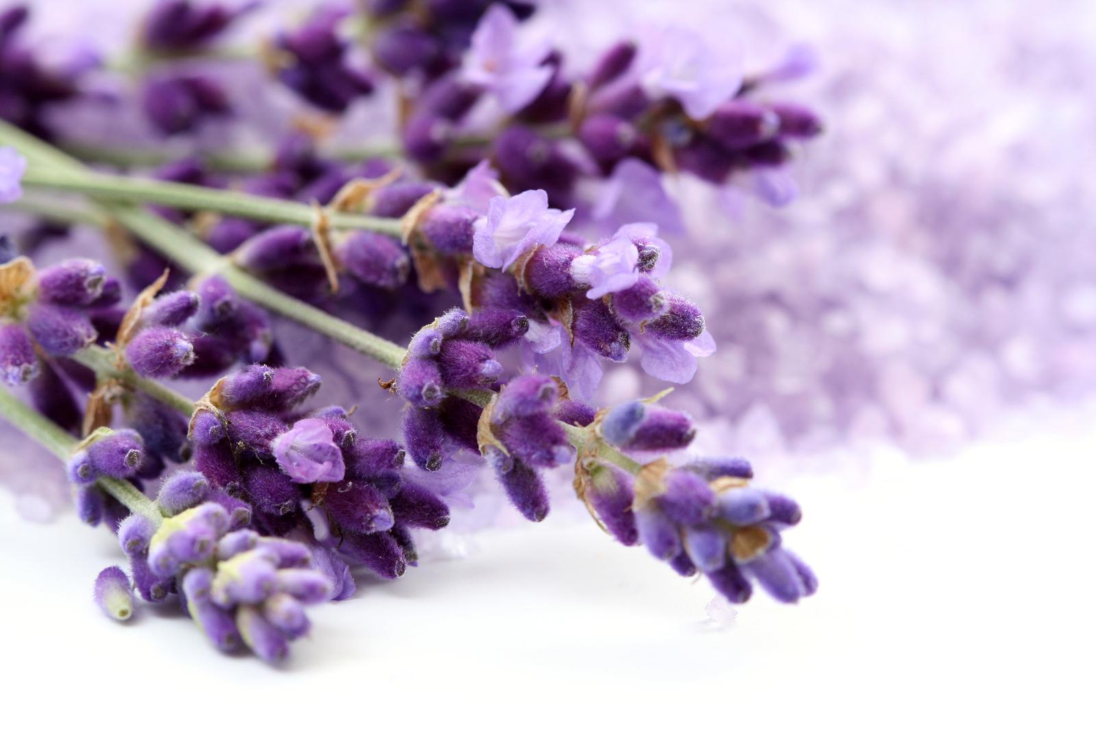 Lavender Flowers beautiful flowers prettiest flowers most beautiful flower
