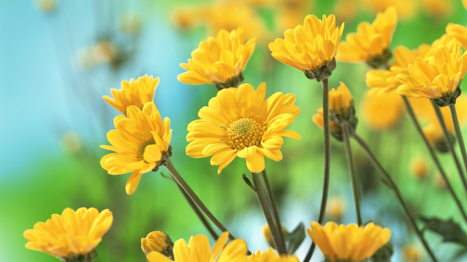 Pictures Of Yellow Flowers With Names Adsleaf