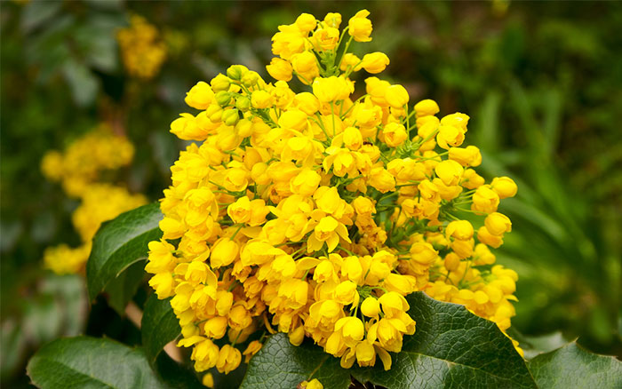 Top 30 beautiful yellow flowers names list with pictures you me yellow flowers with meaning mightylinksfo